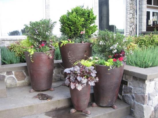 Decorative Plants 1