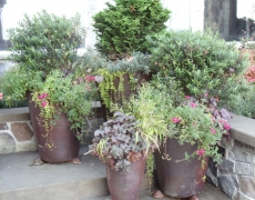 Decorative Plantings