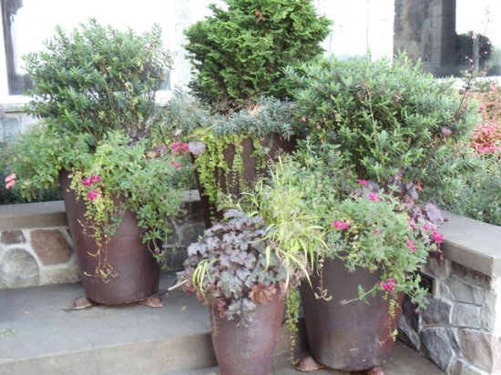 Decorative Plants 3